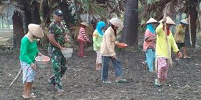 TNI Siap-Siap Sulap lahan Tandus Jadi Kebun Jagung