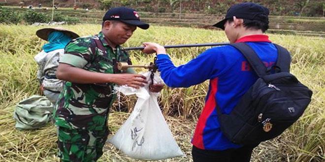 Babinsa Koramil 07/Tretep Mendampingi Panen Padi Bersama KUPT di Lahan Poktan Ngudi Makmur II