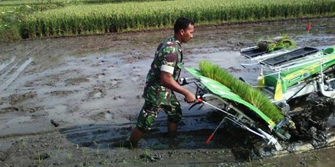 Babinsa Kodim Klaten laksanakan tanam padi dengan mesin Transplanter