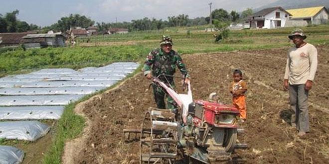 Koramil 04/Ngadirejo Laksanakan Pendampingan dan Perawatan Padi di Desa Gondangwinangun