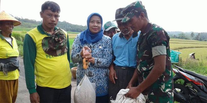 Pendampingan Petani Sukseskan Program Suwasembada Pangan