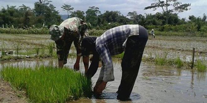 Peran Aktif Babinsa Menyemangati Petani Untuk Percepatan Luas Tambah Tanam di Wilayah