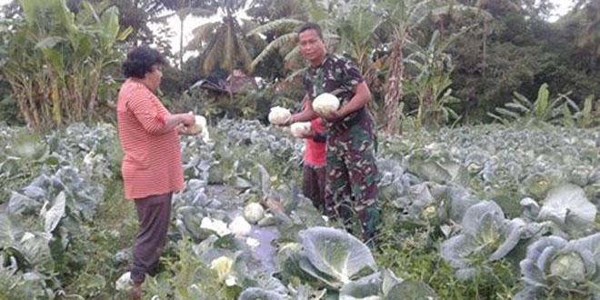Koramil 01/Cangkringan Memberi Contoh Petani Untuk Menanam Sayuran