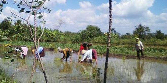 Pendampingan Upsus Babinsa Bercocok Tanam dengan Petani di Desa Binaan