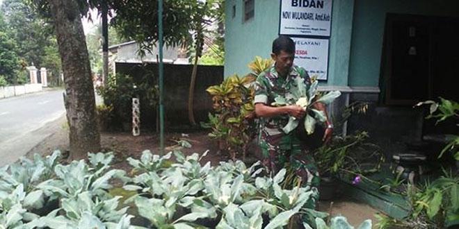 Babinsa Koramil 14/Minggir Memanfaatkan Halaman Rumah Sebagai Kebun Sayuran