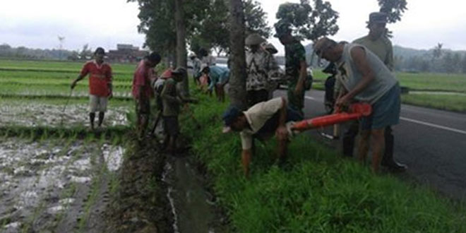 Babinsa Bersama Petani Desa Berantas Hama Dengan Gropyokan Tikus