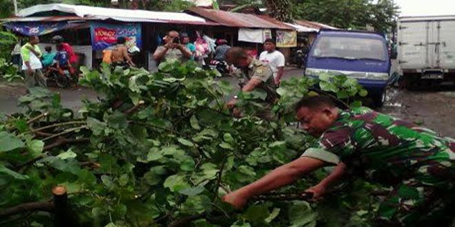 Babinsa Bersama Masyarakat Pingit Mengatasi Pohon Tumbang