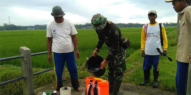 Babinsa Koramil 03/Parakan Bantu Petani Mengatasi Hama Ulat dan Sundep dengan Penyemprotan Pestisida