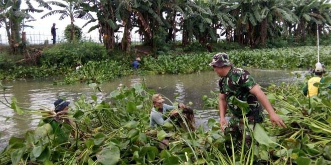 Koramil Undaan dan Petani Bersihkan Eceng Gondok