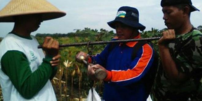 Demi Meningkatnya Jagung di Demak Babinsa Karangawen Dampingi Pengubinan