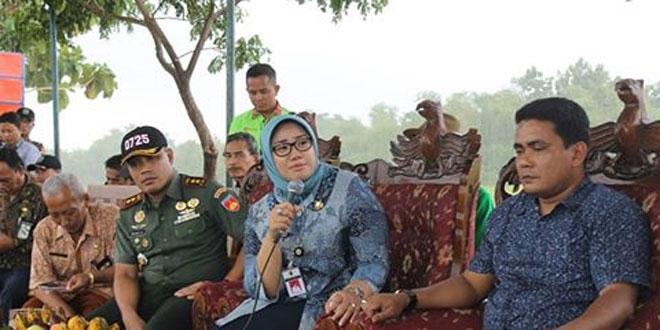 Panen Raya Padi MT I Th. 2017 Bersama Bupati Sragen, Kodim Sragen, Kadistan dan Kadis Han Pangan di Desa Saradan