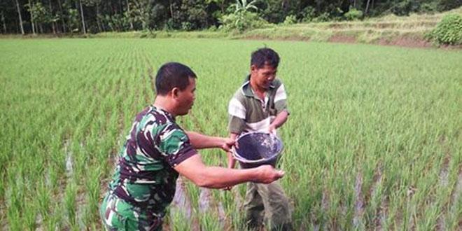 Babinsa Koramil 23/Magelang Utara Membantu Petani Melaksanakan Penyiangan Gulma