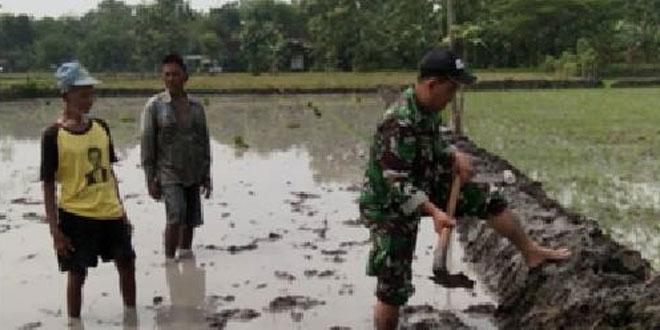 Babinsa Jatitengah Koramil 13/Sukodono Perbaiki Balengan