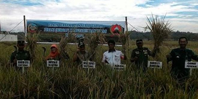 Panen Bersama dan Serap Gabah Kab. Banyumas Th. 2017