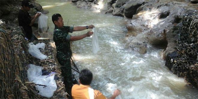 Penaburan Bibit Ikan di Sungai Trenggulin dan Sungai Wadas