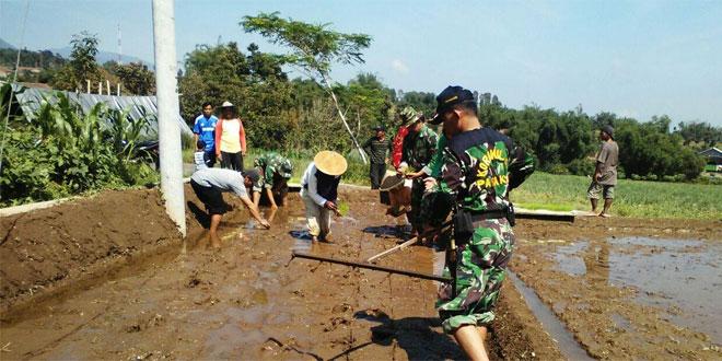 Babinsa Koramil 03/Parakan Giat Pendampingan Tanam Padi di Wilayah Binaan