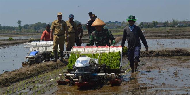 Tanam Padi Serempak Dengan Rice Transplanter