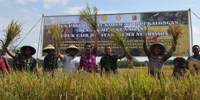Panen Demplot Kodim Pekalongan, Pupuk Wijaya Kusuma Nutrition Tingkatkan Produksi Pertanian