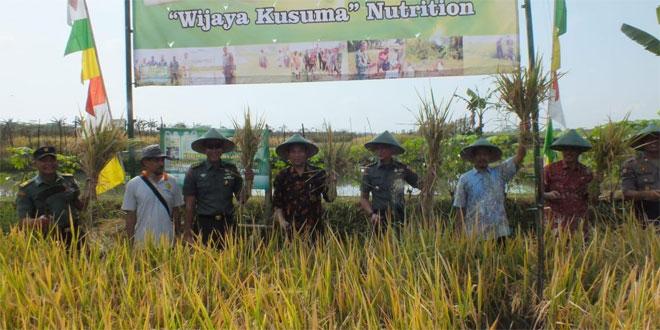 """Panen Bersama Demplot Kodim 0701/Banyumas Menggunakan Pupuk Organik """"Wijayakusuma"""" Nutrition"""