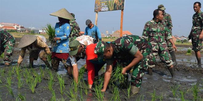 Bantu Petani, Kodim Pekalongan Siapkan 25 Ha Lahan Demplot Pertanian