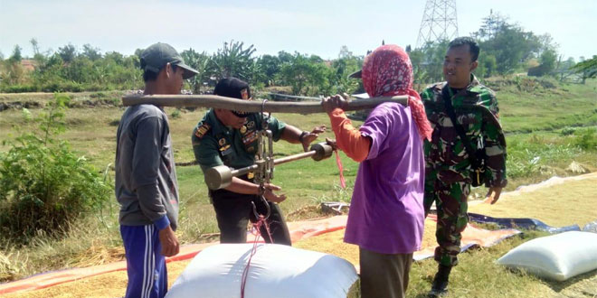 Pupuk Wijayakusuma Nutrition : Danramil Tanjung Ikuti Perkembangan Hasil Panen Padi