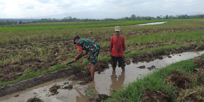 Babinsa Koramil Bandongan Bantu Petani Siapkan Lahan Tanam
