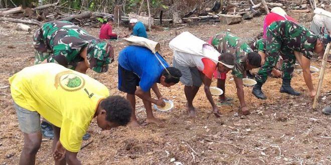 Satgas Yonif 406/CK Tanam Padi Gogo Tahap ke Dua di Perbatasan RI – PNG