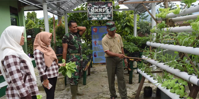 Koramil Lebakbarang Sulap Lahan Sempit Dengan Budidaya Tanaman Sayuran Hidroponik