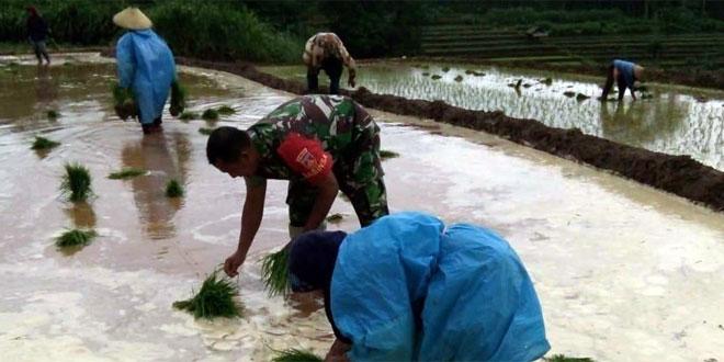 Keakraban Babinsa dengan Petani Untuk Mewujudkan Swasembada Pangan Nasional