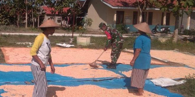 Tingkatkan Kualitas, Babinsa Koramil 0721/06 Jiken Bantu Petani Jemur Jagung