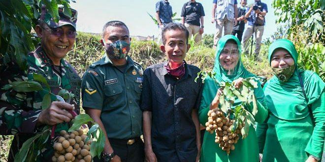 Senangnya Pak Pitoyo bisa panen Kelengkeng bareng Pangdam IV/Diponegoro