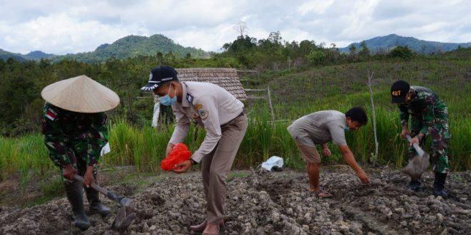 Tingkatkan Hasil Pertanian, Satgas Pamtas RI-MLY Yonif 407/PK Bagikan Bibit dan Pupuk Kepada Warga Perbatasan