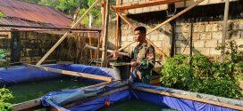 Manfaatkan Lahan Kosong, Satgas Pamtas Yonif 403/Wirasada Pratista Melaksanakan Budidaya Ikan Lele di Wilayah Perbatasan RI-PNG