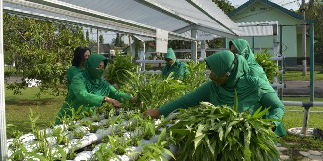 Panen Sayur Hidroponik Dukung Ketahanan Pangan di Masa Pandemi